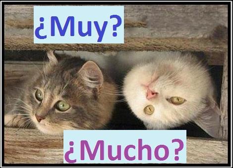 Прислівники muy i mucho в іспанській мові, правила їх вживання. Граматика іспанської мови